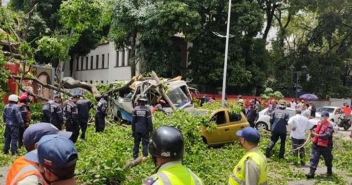Un muerto y varios heridos dejó un árbol que cayó sobre una camioneta de  pasajeros en Caracas - Emisora Costa del Sol 93.1 FM